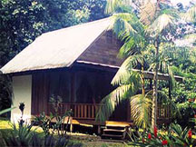rainforest accommodation