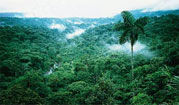 Tropical Rainforest in Costa Rica, Central America