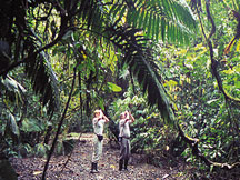 Hiking in the jungle at Golfo Dulce Lodge private reserve